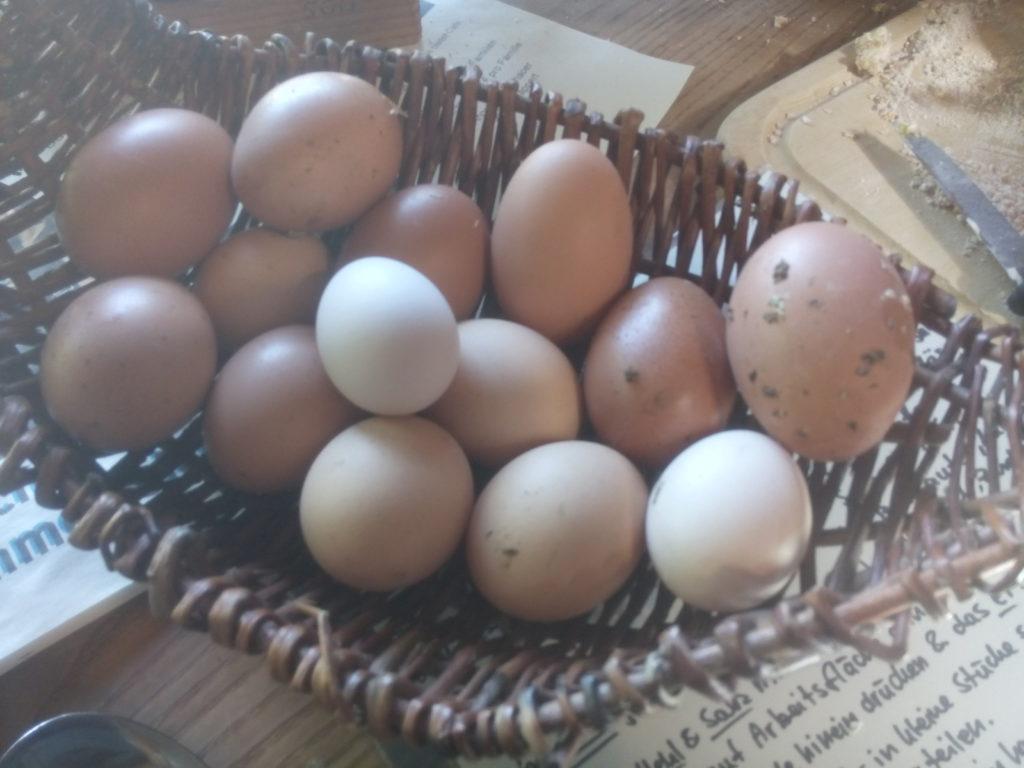 Frisch gesammelte Eier.
